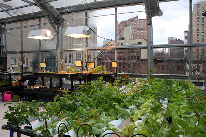 rooftop greenhouse rh myrooff com greenhouse roof blinds greenhouse roofing materials