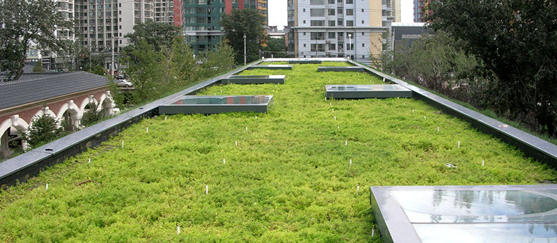 extensivegreenroofs 2