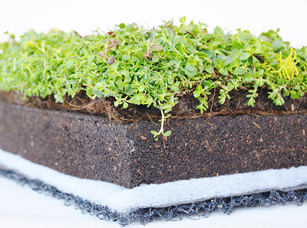Layer Is A Very Fine One You Must Take More Care Towards Installation Of Filter So That It Can Improve The Strength Your Green Roof