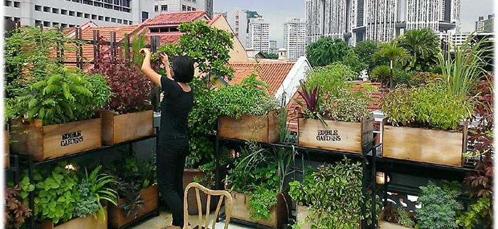 Edible Roof Garden