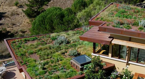 Houses With Green Roofs